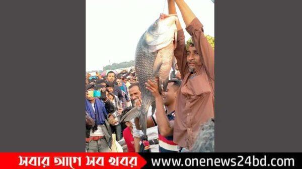 জামাই-শ্বশুরের বড় মাছ কেনার প্রতিযোগিতা